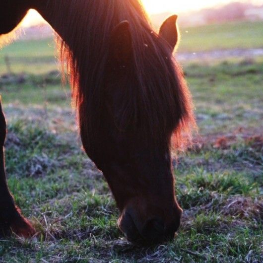 Perfect Sunrise on a morning graze. Horse photography.