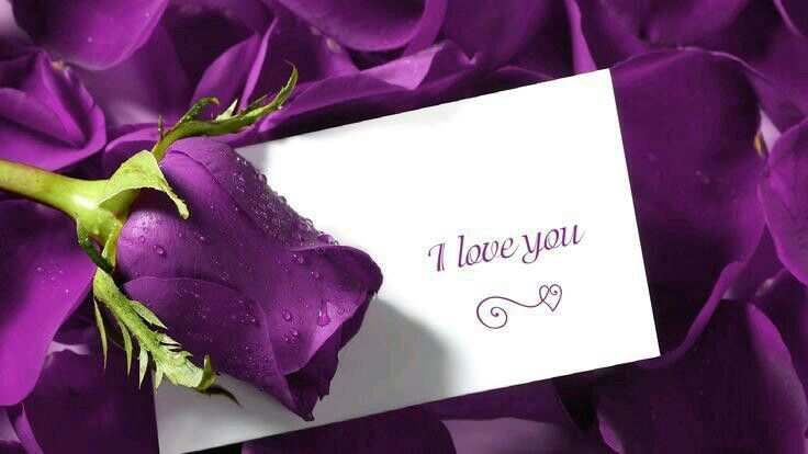 Purple Rose with Letter I Love You ❤