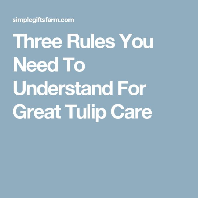 Three Rules You Need To Understand For Great Tulip Care