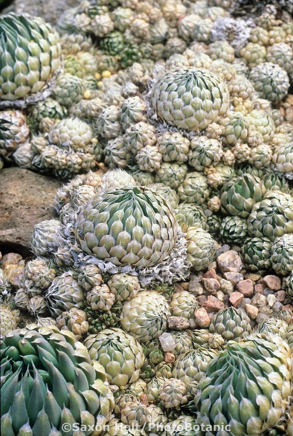 Best 586 Succulents With Names Images On Pinterest Gardening