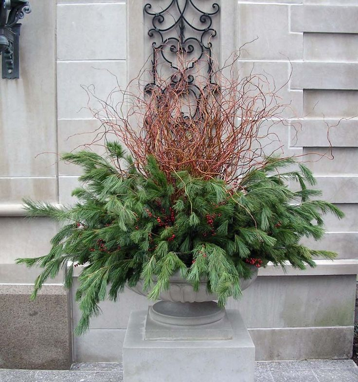 Winter Decor Display Annuals Landscape Urban