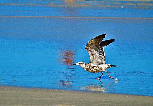 Alçando voo à beira-mar / Elevating flight seaside