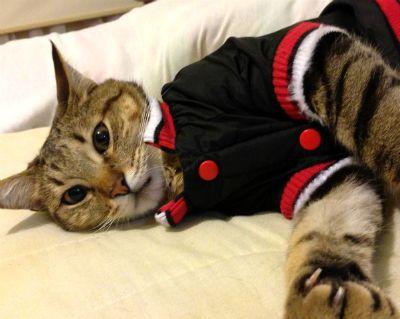 Tango #cat #gato #pereza #laziness #chat #paresse