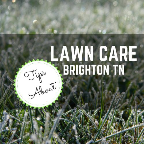 how to get a lush lawn