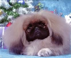 Image result for Birthday cards with Pekingese