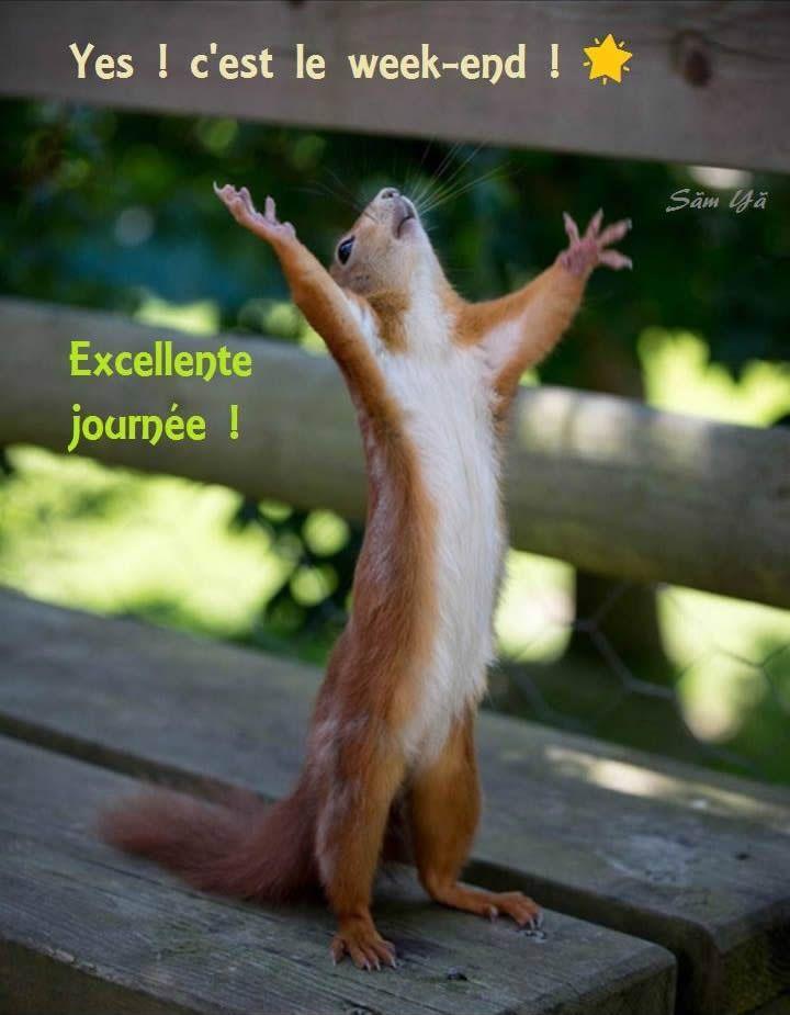 Yes! C'est le week-end! Excellente journée! #bonweekend cest le week end ecureuil drole bon week end humour