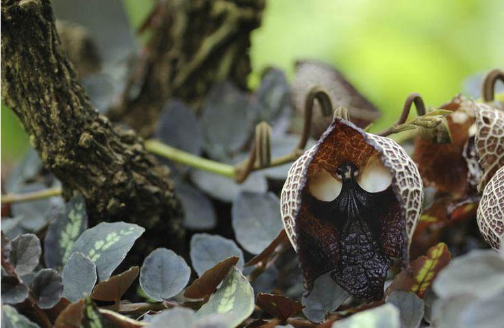 Lijstje van de week: 7x bloemen die op iets anders lijken. #orchidee #darth #vader #lijstje