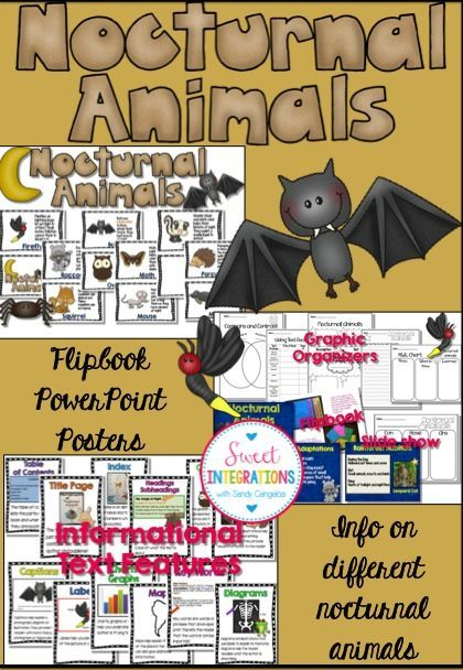 Nocturnal Animals Research Posters