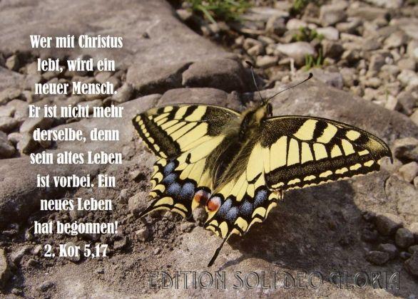 christliche Postkarte 43 - 2. Korinther, Schmetterling, Schöpfung, Neugeburt - Bibel a la Carte - Christliche Karten
