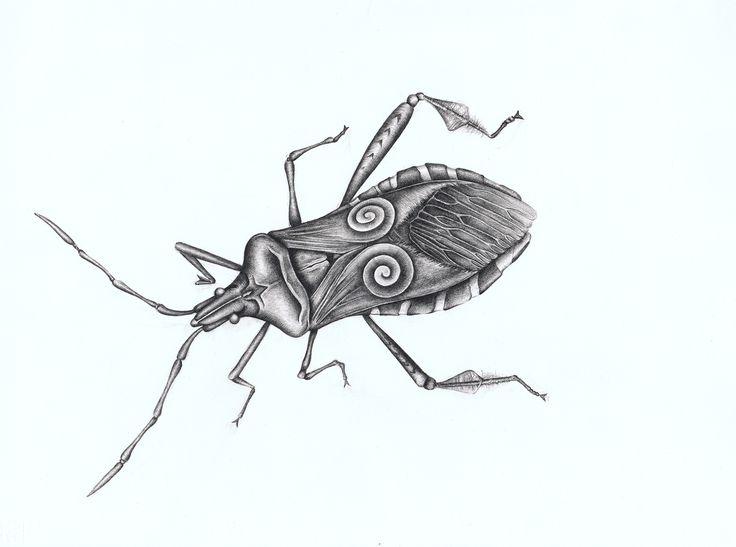 Western Conifer Seed Bug by Meg Yamamoto