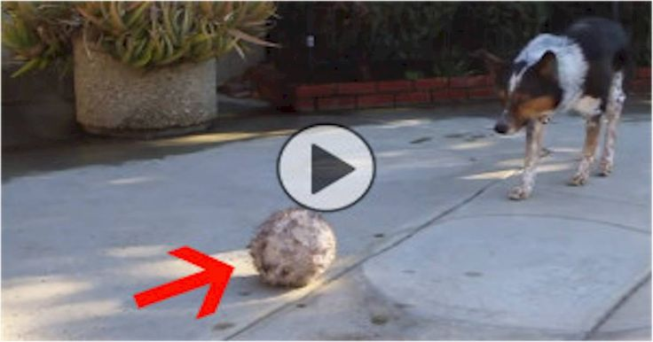 GONE VIRAL: WOW!  They're Saying This Is The World's Smartest Dog.  Can You Believe He Can Do This?
