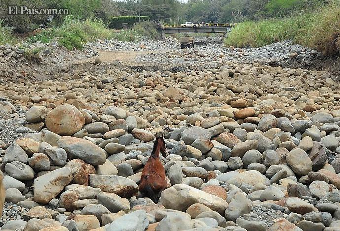 Este caballo tuvo que ser rescatado del lecho seco del río Pance. Foto: José Luis Guzmán.    Créditos: Equipo de Fotografía de El País
