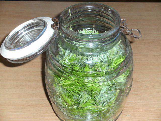 Das perfekte Gesundheit: Tannwipfel-Sirup-Rezept mit Bild und einfacher Schritt-für-Schritt-Anleitung: Je nach Höhenlage, sind die frischen, hellgrünen…