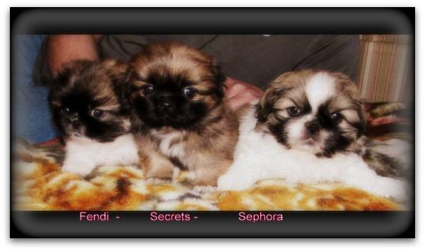 My baby pekingese girls :) I love them.