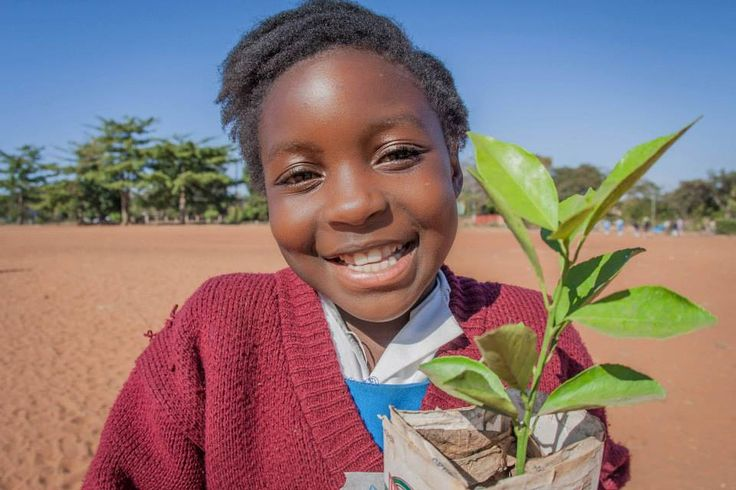 We're very proud to have once again donated more than 1000 trees from Toka Leya's nursery to GreenPop's annual Livingstone reforestation project!  Read all about Toka Leya's impressive back-of-house water recycling, tree nursery and worm farm projects: http://www.we-are-wilderness.com/article/206-mike-marian-on-safari-going-green-at-toka-leya
