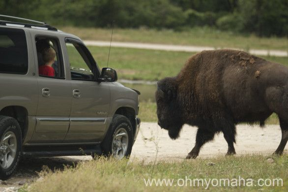 Wildlife Safari Park in Ashland, Nebraska - Petting zoo, details on feeding times and lots of pictures