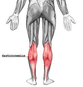 Beinmuskeln trainieren, aber wie? - im Artikel erfährst du die Hintergründe zur Anatomie der Beinmuskeln, welche Fehler du unbedingt vermeiden solltest und welche Übungen die Besten sind.