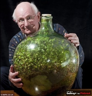 David Latimer planted this terrarium in 1960, last watered it then sealed it in 1972.