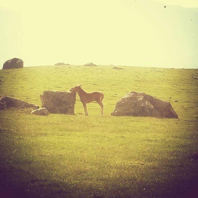 Ça me grattouille sous le menton ... #poulain #cheval #montagnebasque #montagne #PaysBasque #basque #igerseuskadi #basquecountry #euskalherria #randonnée #rando #instarando #horse #horselove #caballo #zaldia #animal #instanimal #instapaysage