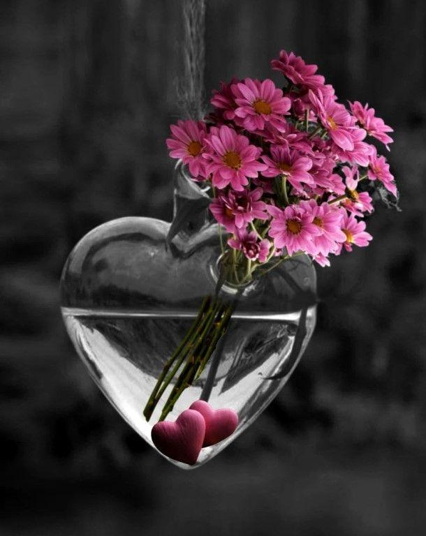 этого цветы со смыслом фото злобные милые