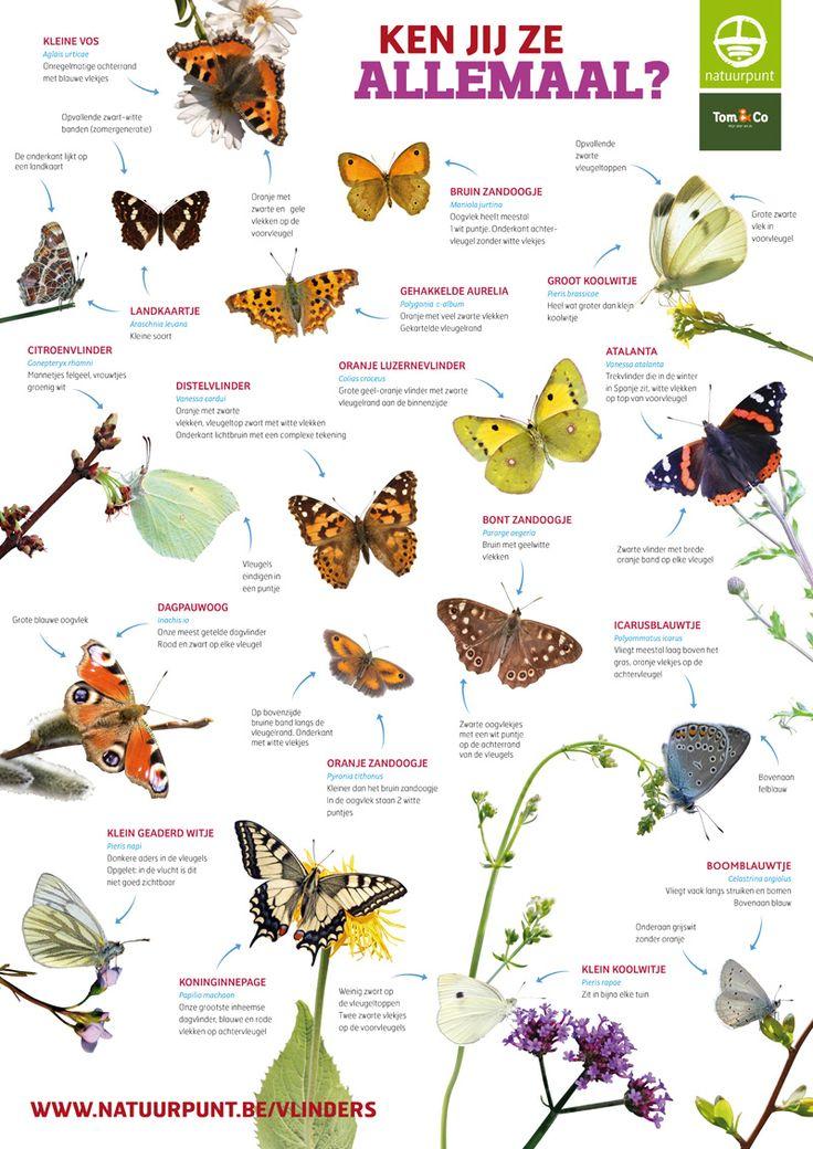 Affiche Vlindermee 2014 - achterzijde.jpg (800×1131)