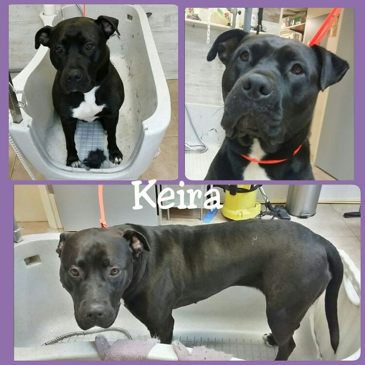 My big girl Keira 😍