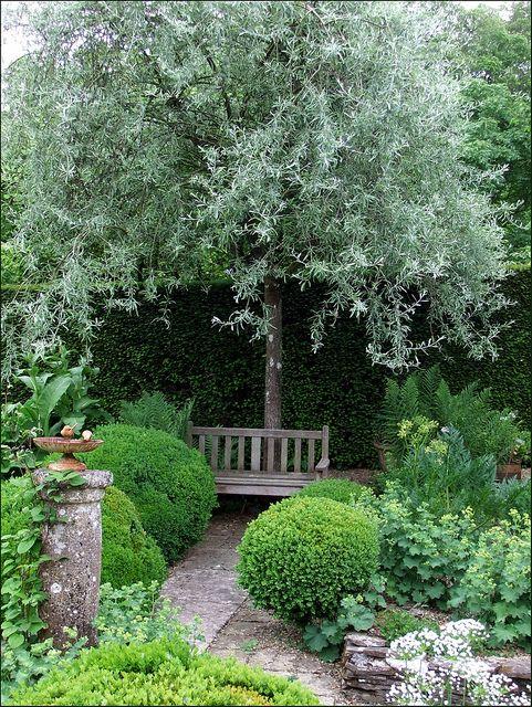 Jardin de Castillon, près de Bayeux by tordouetspirit with Pyrus salicifolia 'Pendula' forming the focal point behind the garden seat, via Flickr
