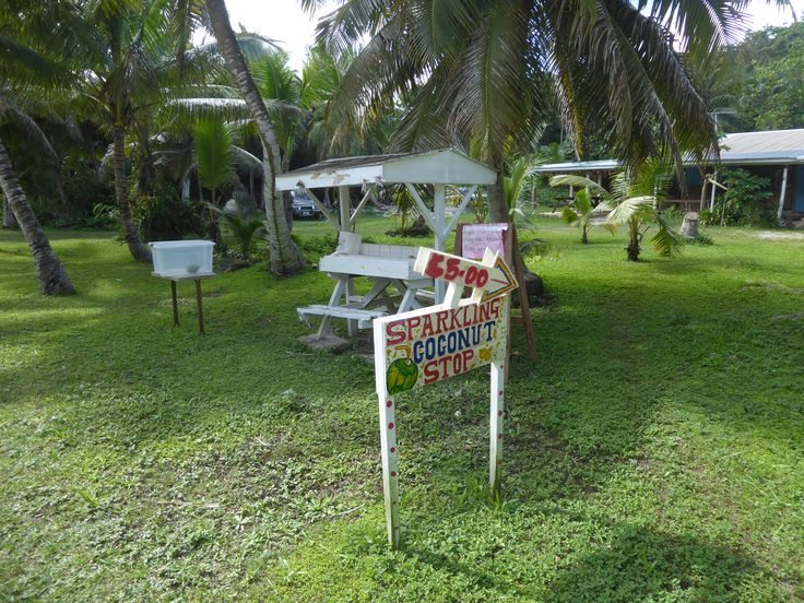 Cool coconut stop on Niue Island. Make you check out all the other great things to do while on Niue.