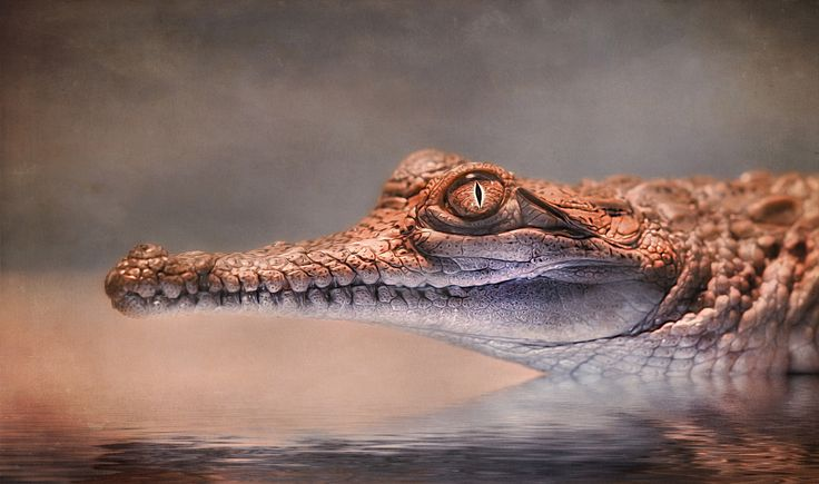 see you later, aligator! by Detlef Knapp on 500px