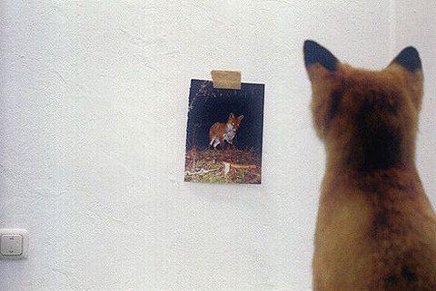 fox sees fox