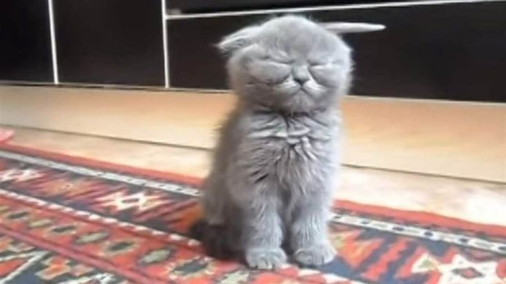 Det är inte lätt att vara liten. Man blir ju så trött, så trött. Och det slår till så plötsligt, så plötsligt att du inte hinner gå och lägga dig. Ja, du vet själv hur det känns när du bara inte kan hålla ögonen öppna längre. Att kattungen lyckas hålla sig uppe så länge är imponerande.