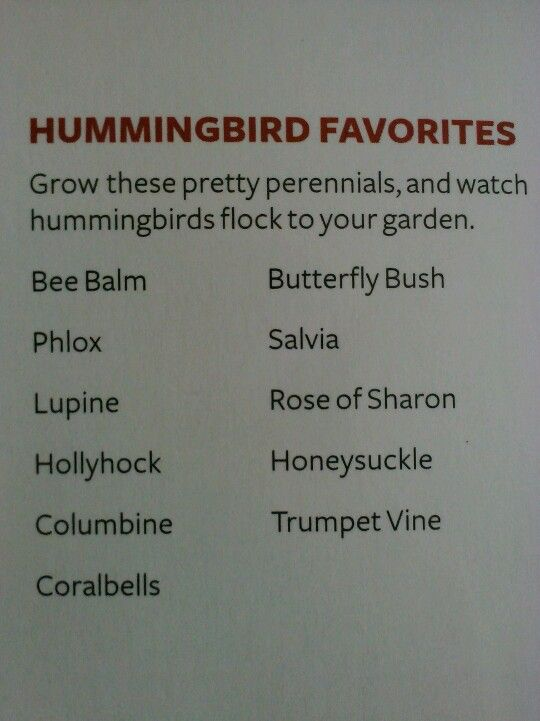 List of flowers that attract humming birds