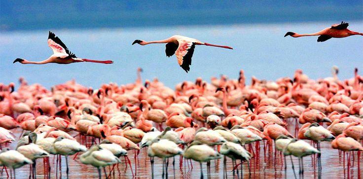¿De qué hablamos cuando pensamos en los sitios Ramsar?