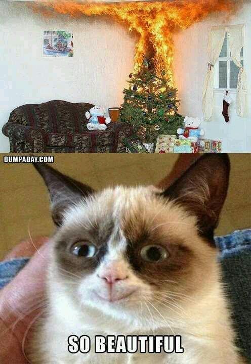 Happy grumpy cat