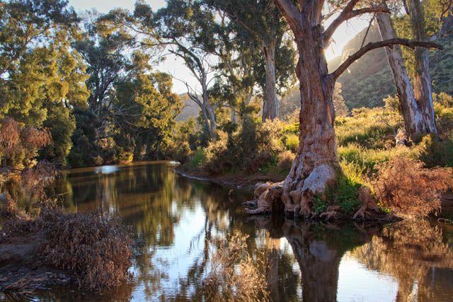 Arkaroola-Creek.jpg (640×427)