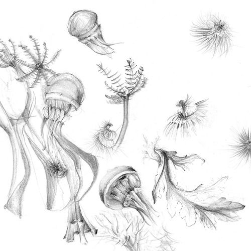 Development sketches for my upcoming sea life print… © Shelley Steer
