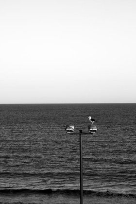 Seagull over the lamp post. Original photograph by Felix Padrosa