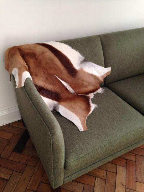 Springbok hide.