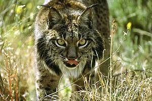 WWF España - Revive tu Naturaleza. Los políticos europeos pretenden desproteger a las joyas de nuestra naturaleza