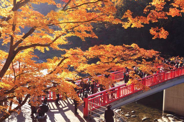 香嵐渓 (Kourankei) 香嵐渓 巴川に待月橋と紅葉【絶景NIPPON】 #絶景 #紅葉 #AutumnLeaves