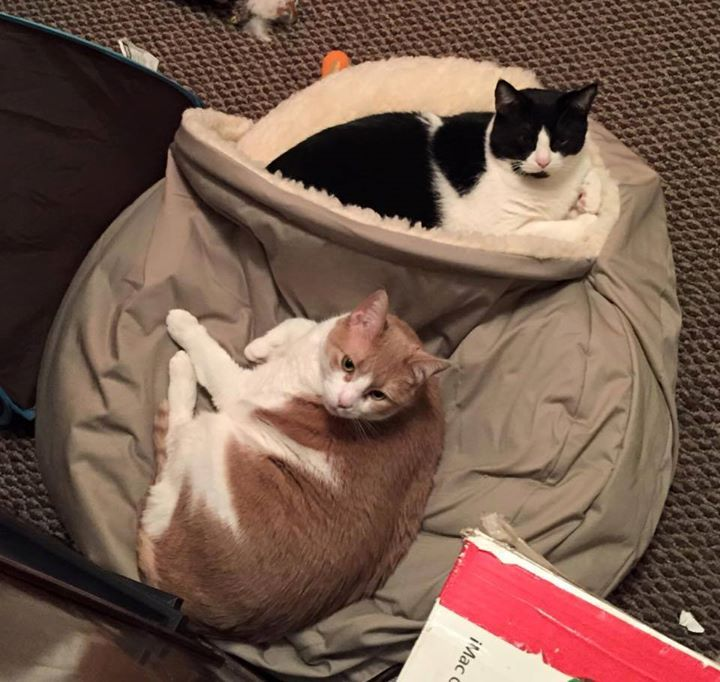 one kitty likes to be inside the cozy cave while the other likes to be on top cozy cave customers pinterest cozy cave dog bed cave dog bed and dog - Cozy Cave Dog Bed