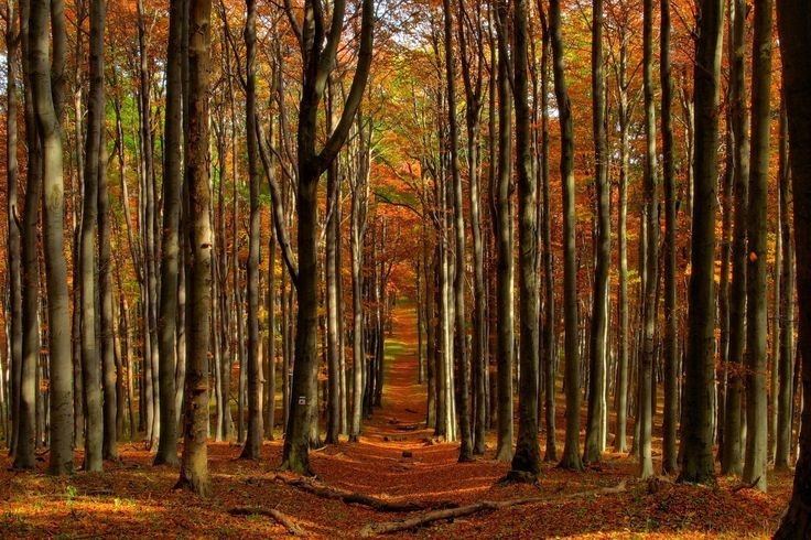 Landscapes forest woods autumn fall leaves wallpaper