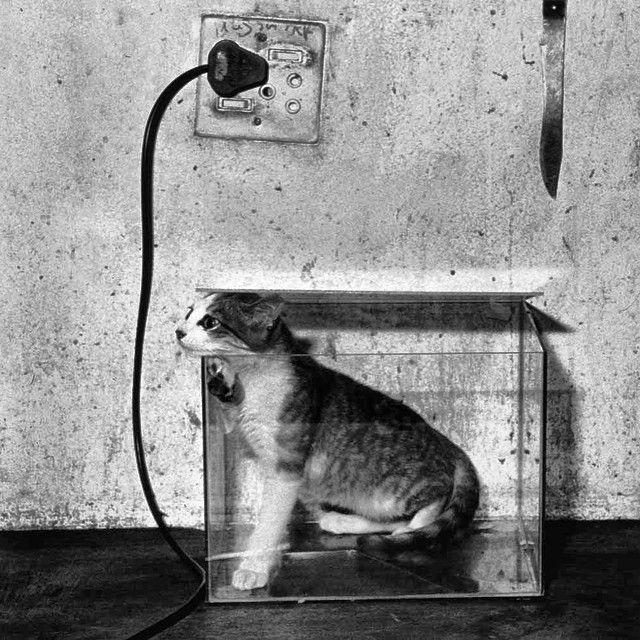 Cat in a Fishtank // Roger Ballen // Photography