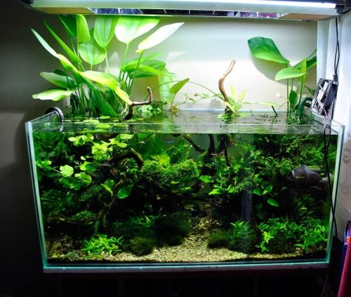 Open top aquarium with plants growing out of the water for Growing plants with fish