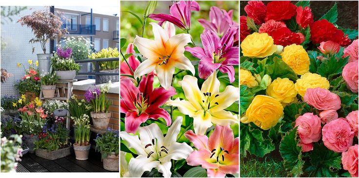 Qué bulbos se plantan en primavera para jardines preciosos en verano y otoño