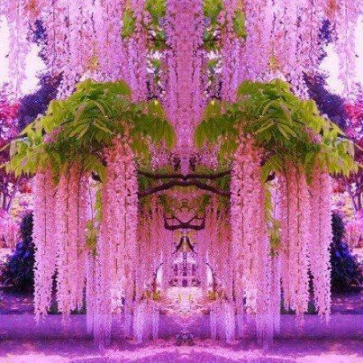 Best Wisteria Images On Pinterest Beautiful Gardening And - Beautiful wisteria plant japan 144 years old