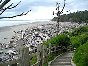 Driftwood beach at Olympic National Park - Klaloch Lodge. LOVE this beach.  Stay in the cabins...so peaceful!