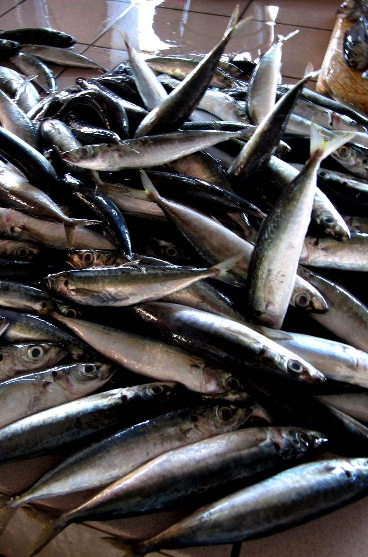 Puesto de pescado en Kota Kinabalu