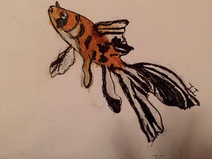 My shubunkin goldfish