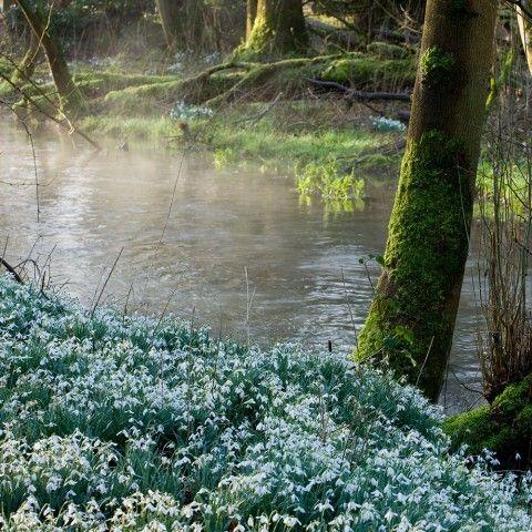 Doddington Place Gardens - » The National Garden Scheme Snowdrop Festival - Faversham, Sittingbourne, Kent